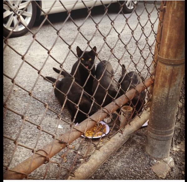 Honest Kitchen Owner Eating The Dog Food